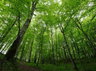 Forêt de Thiers