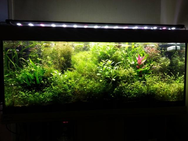Mes (plus) de 60 plantes dans mon 240 litres - Page 4 80056120140713202919