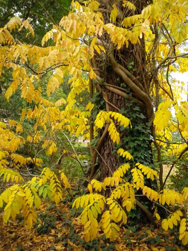 Couleurs d'automne, petit moment d'émerveillement 801588IMGP4194