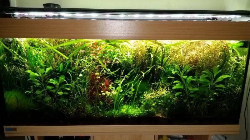Mes (plus) de 60 plantes dans mon 240 litres - Page 6 80300920150208082955