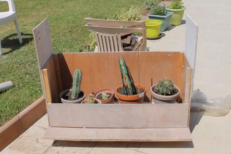 Mon coffre a cactus! 803367IMG1377Copier
