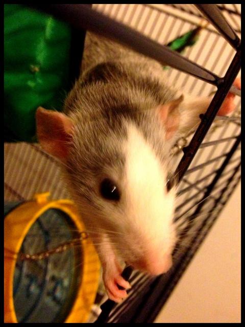 Les ratons de Niort ! 803644liloo2