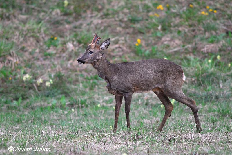 Quelques photos animalières.. 803911DSC4263