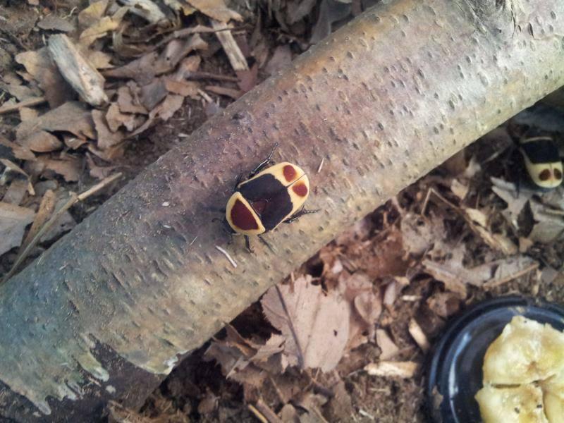 Elevage d'insectes en photos... Pourquoi pas?! 8064814313