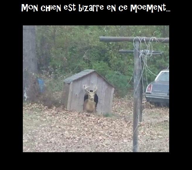 HUMOUR - Drôles de bêtes... - Page 9 807398C5WSOxGW8AAxqb