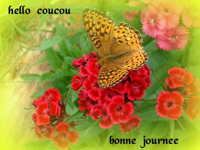 Bon Vendredi 809870papillondiantus001