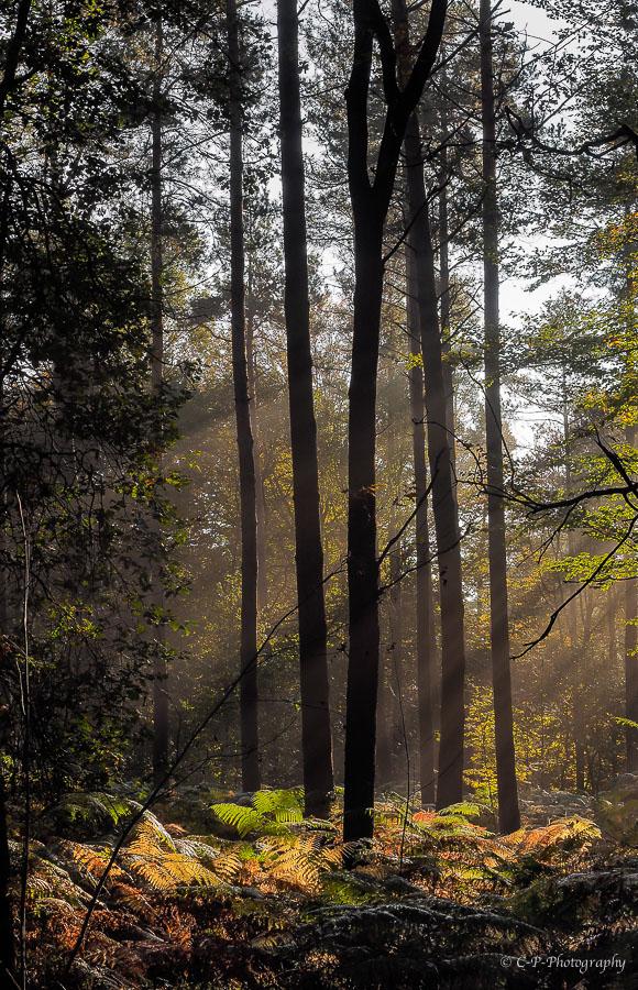 il n'y a pas que des champignons en forêt... 810108A230003