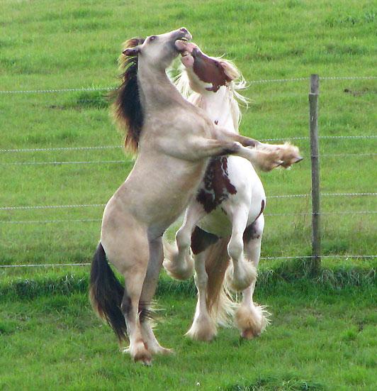 - Les mâles des Légendes Celtiques 810383IMG0836