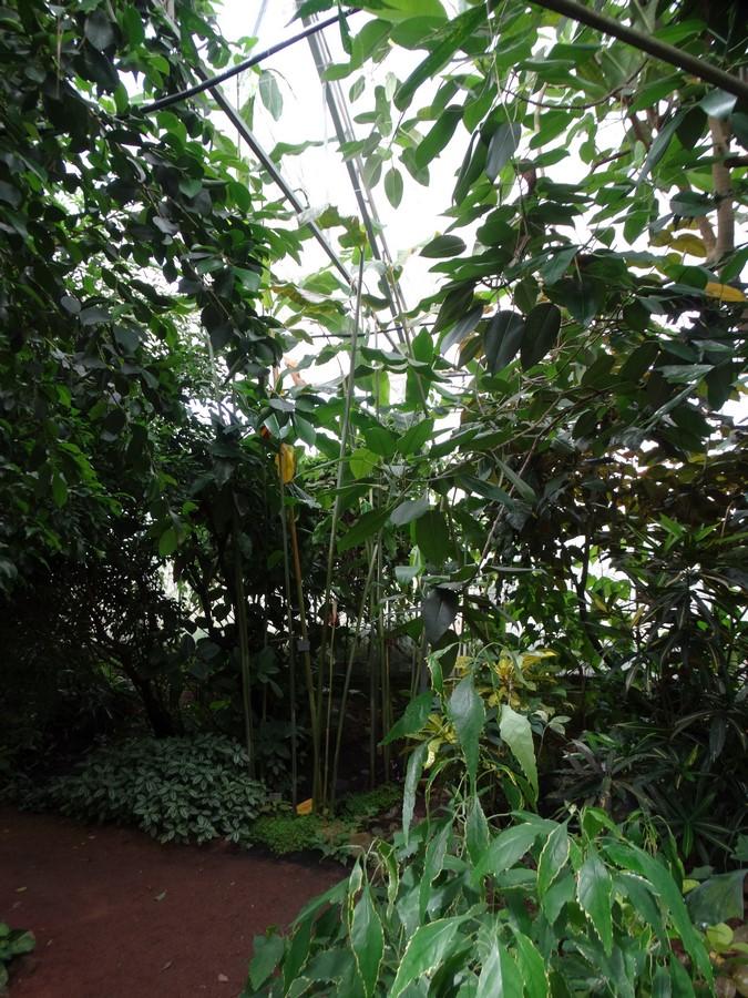[Fil ouvert] Fleurs et plantes - Page 6 811917053Copier