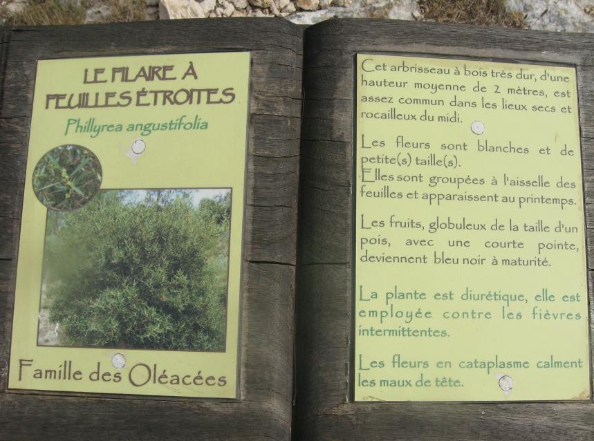 """D"""" ORANGE A LA COTE BLEUE NOUS A EN AVONS VU DE TOUTES LES COULEURS  - Page 2 812292IMG_3351"""