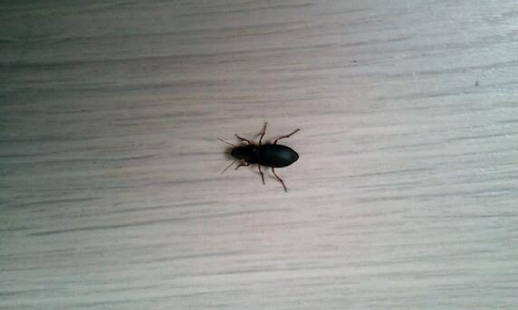 Quel est cet insecte? 814579insecte