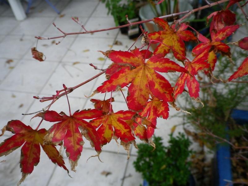 Couleurs d'automne, petit moment d'émerveillement 815608IMGP4190