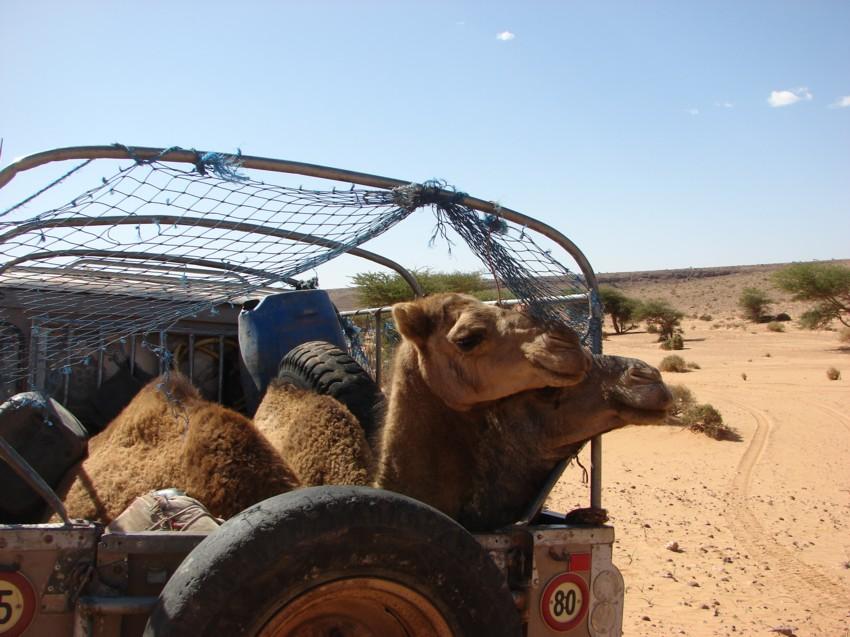 retour maroc 2012 - Page 2 815673099
