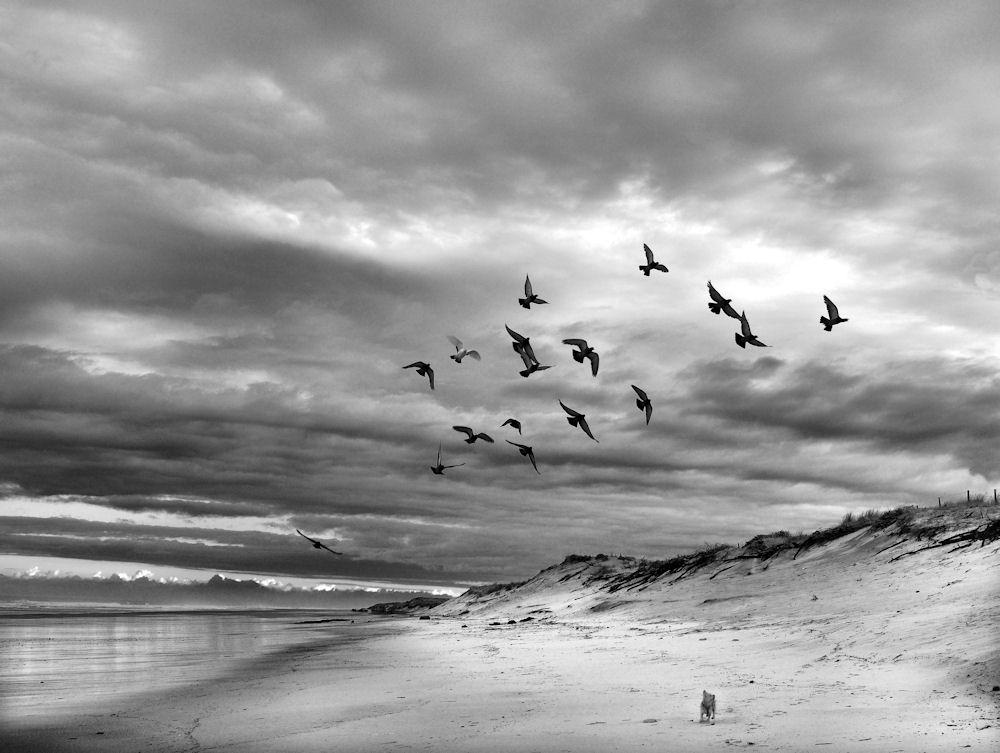 dunes. 816045satis01