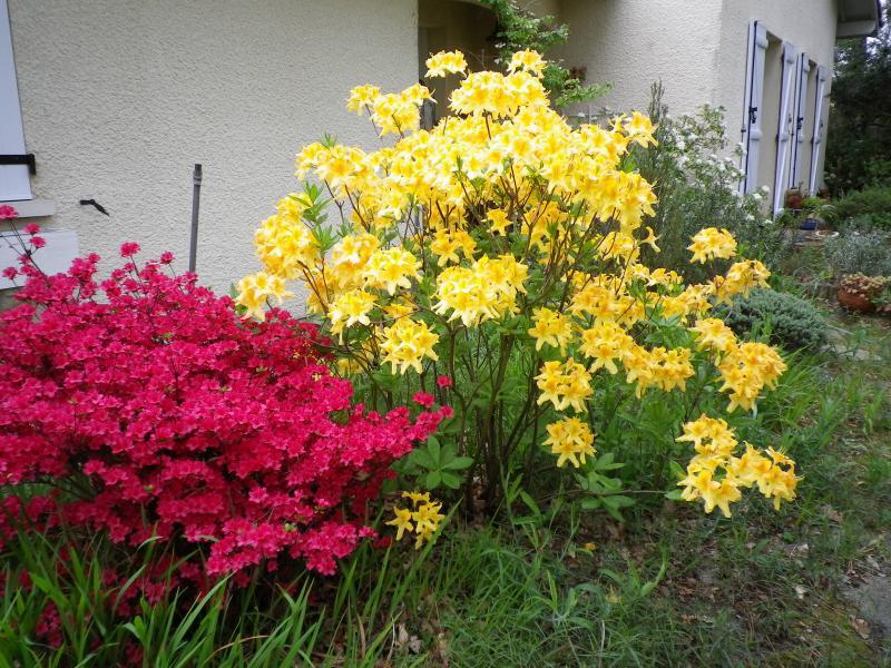 Quelques floraisons 818664IMGP1426