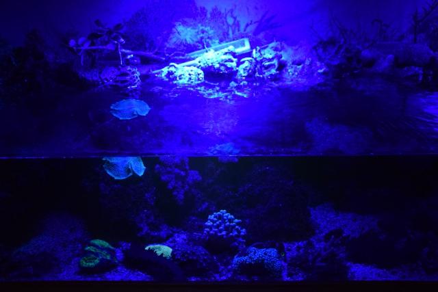 Le nouveau bac du Poissonpané : aquaterrarium de 900L / Nouvelle Calédonie - Page 2 825168DSC0085