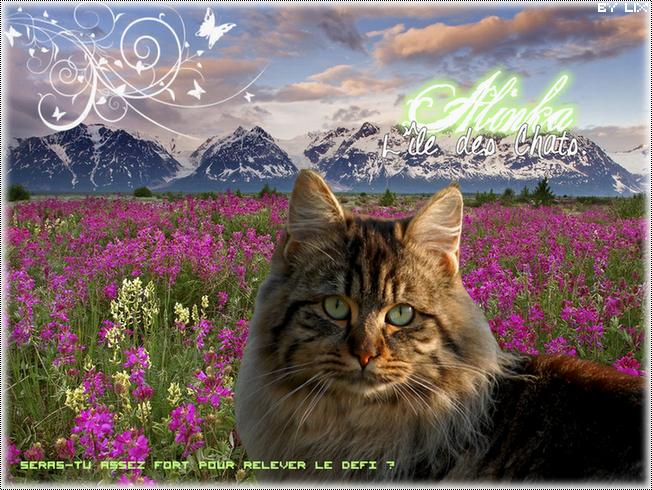 Alinka, l'Île des Chats