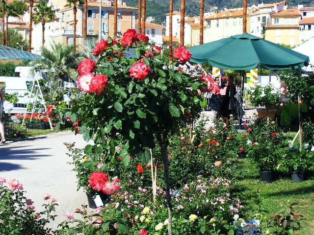 Balade à Menton le 12/09/2010. 831098expo_jardin__12.09.2010._004