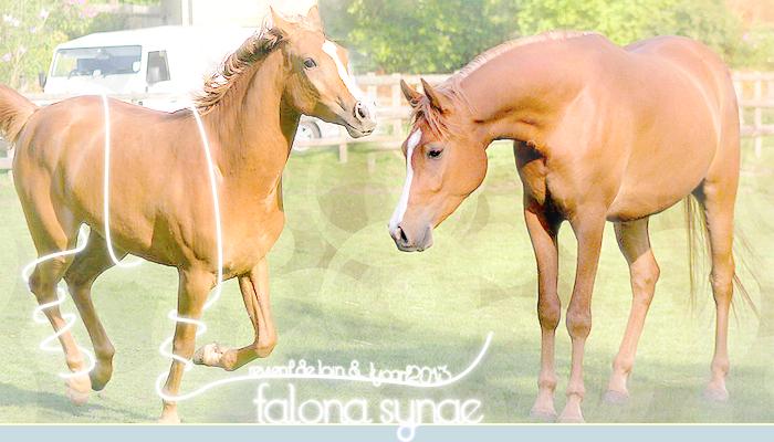 Crédits ; Falona Synae © 834506FalonaSynaeheader51