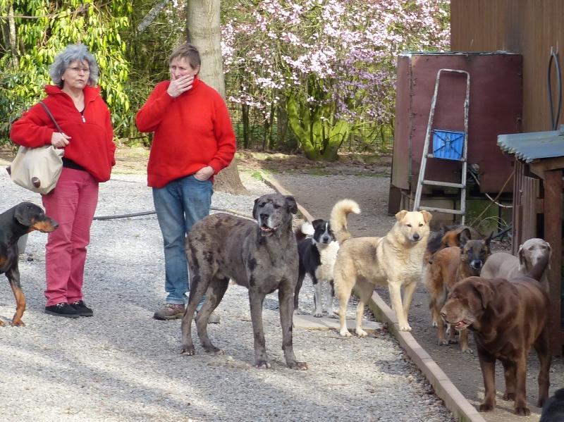 Pongo, chien des rues, né en 2009, très affectueux !! 834752P1080312