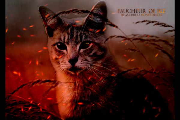 [Libre] Faucheur de Blé ♂ Guerrier 23 Lunes [Partiel] 840730fdb