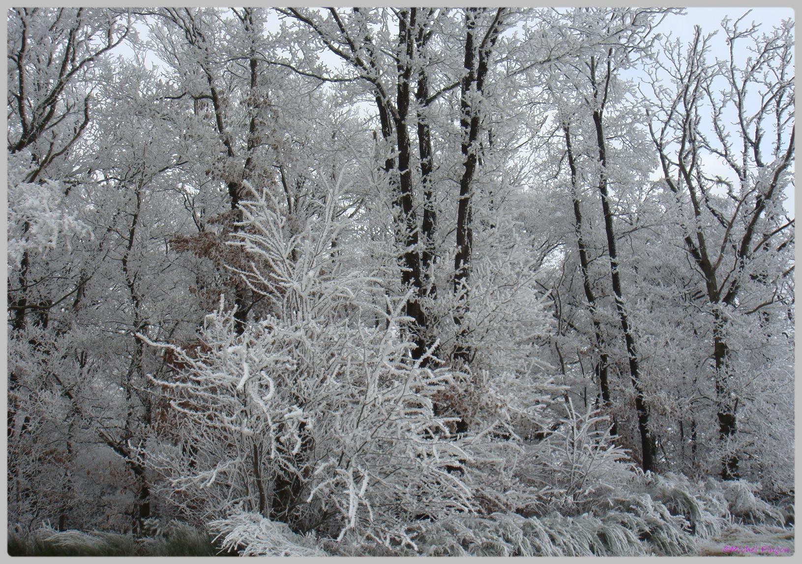 [fil ouvert] la forêt dans tous ses états - Page 11 844859DSC011780