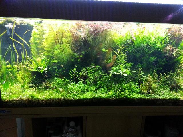 Mes (plus) de 60 plantes dans mon 240 litres - Page 2 84790620131220185756