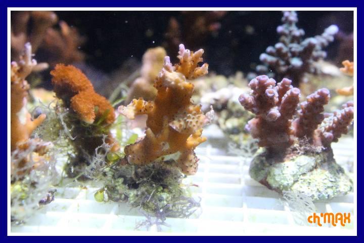 ce que j'amène en coraux a orchie  849037PXRIMG0040GF