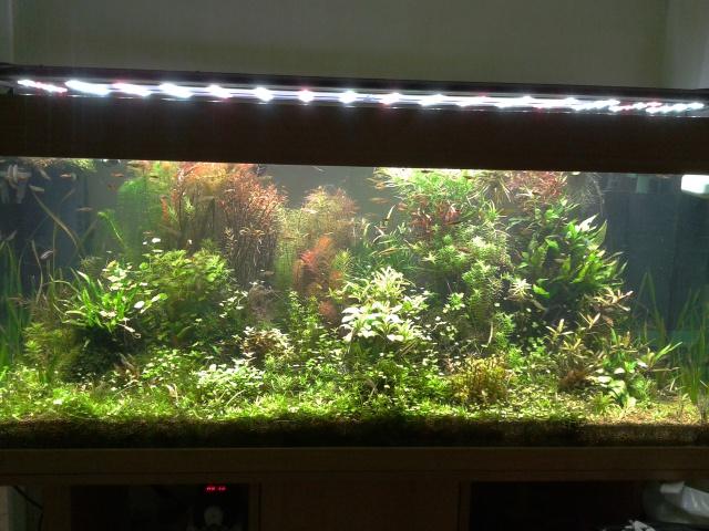 Mes (plus) de 60 plantes dans mon 240 litres - Page 2 85184920131224122652