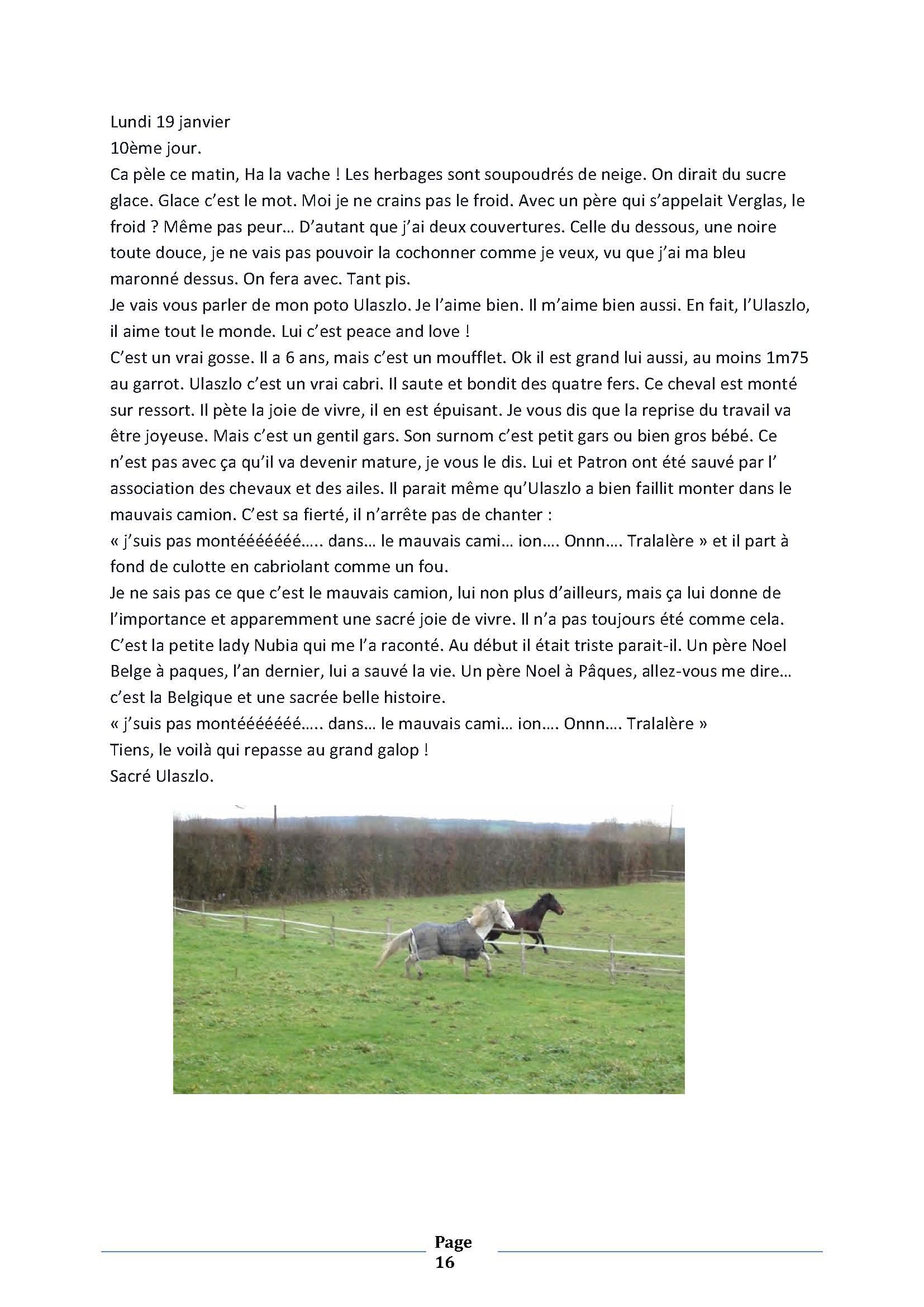 (dpt 76) ESTIMAUVILLE Pur sang Anglais, né en 2001, hongre, en FA chez Michèle76 - Page 5 853410janvierPage16