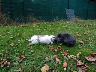 Nina, lapine bélier, née en aout 2011 - Page 9 854277DSC00469
