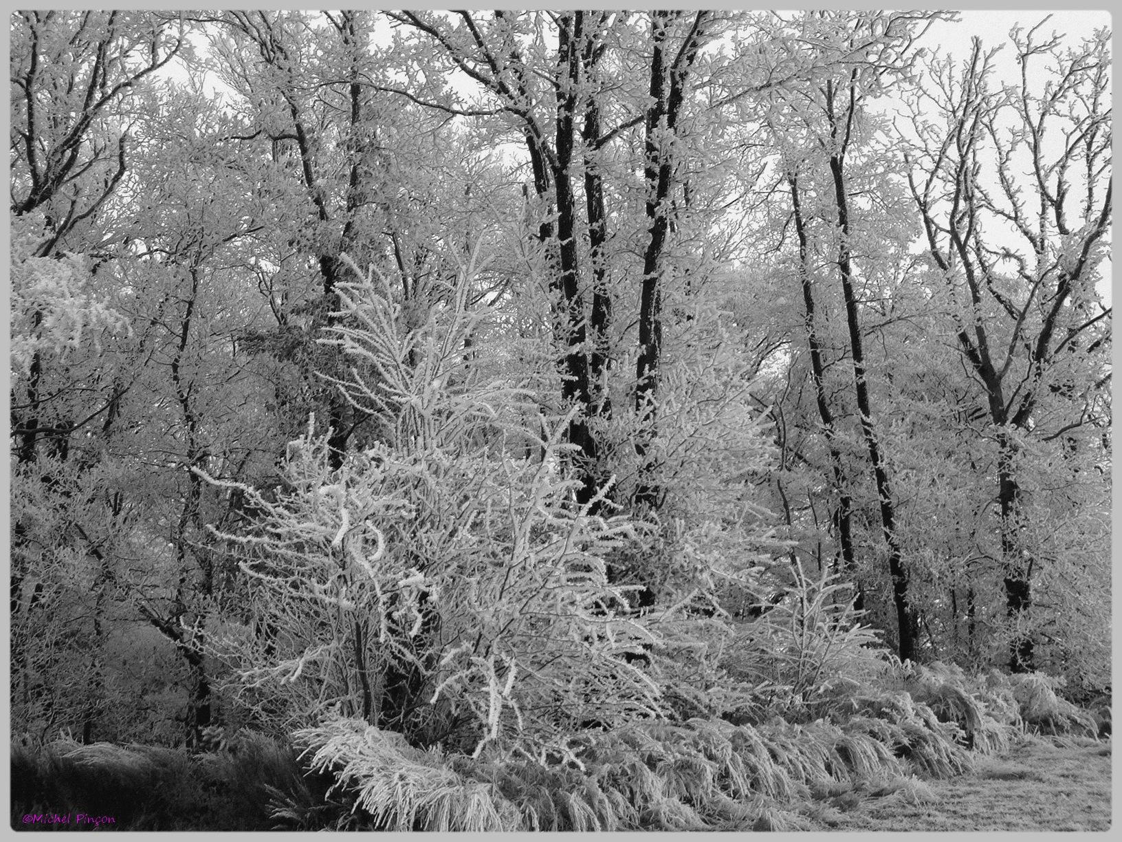 [fil ouvert] la forêt dans tous ses états - Page 11 856217DSC011787