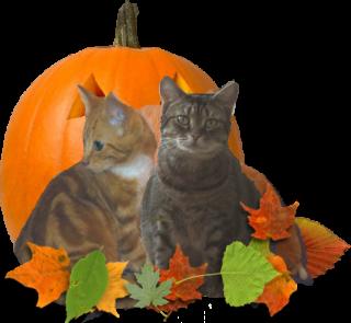 tube halloween 857366halloween7p