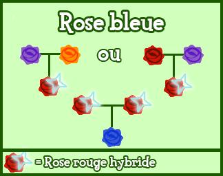"Elyne ""OverLand"" : Les fleurs Hybrides 857894479250Rosebleue"