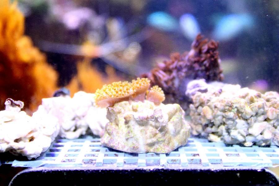 je risque fort de devenir une sardinne - Page 12 860201PXR_IMG_0009