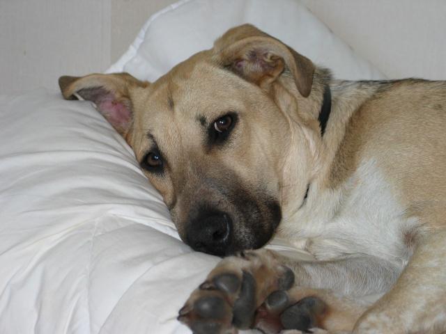 Lila, adorable chienne croisée, née en octobre 2011 860205IMG9310