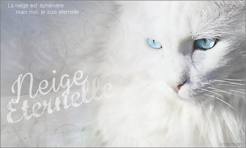 Galerie du Soleil ♪ 860402signaNeigeEternelle