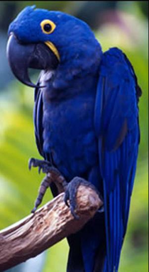 Tubes rapasse et oiseaux 860553Mellmelgibson1e3