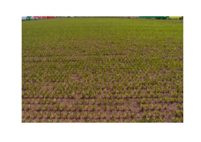 Petite histoire de l'énergie, son rôle en agriculture dans l'histoire - Page 2 861707bineuse