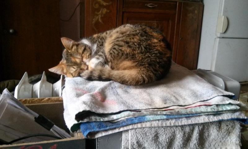 DUCHESSE - chatte femelle, née 2011/2012, borgne - (PASCANI) - adoptée par Chantal Pascal (dpt 63) - Page 5 865710112Onestsibiensurleradiateur