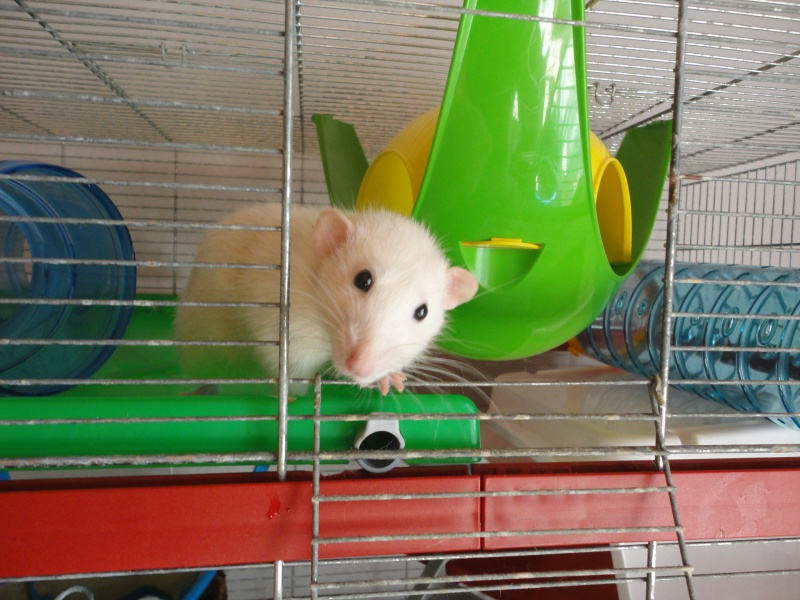 Mousse, Pik&Croq et miss Penny 866693DSC00936