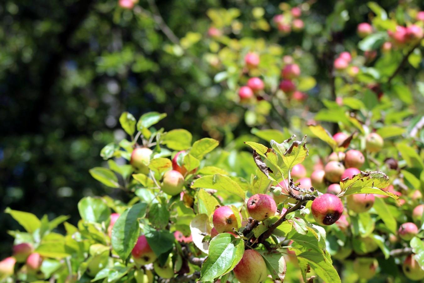 [Fil ouvert] Fruit sur l'arbre - Page 9 867879014Copier
