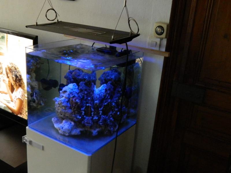 Aka's Reef Cube ! 869513DSCN0079