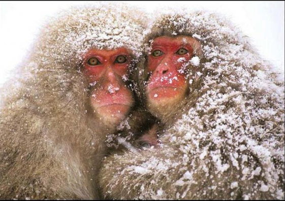 Samedi 9 Janvier 2016  Les Sïnges en Hiver. L'hivernale nocturne des Gogo ! 878954Capturedcran20151101142441