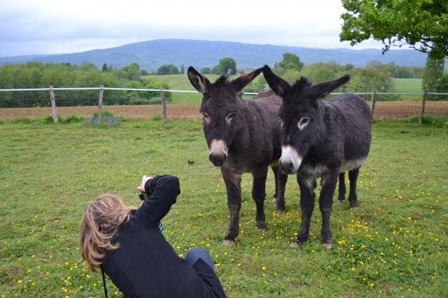 (dpt 71) A ADOPTER, MILAN et ZADIG, ânes communs, en famille d'accueil chez Charly71 - Page 2 883510100