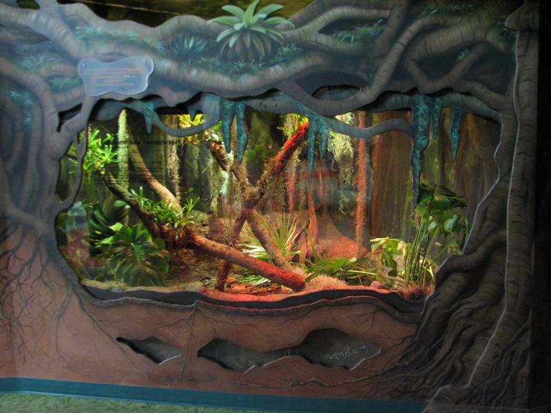 [18-31 octobre 2014] Voyage de noces à Walt Disney World et à Universal - Page 12 885681rafikisplanetwatch1886176
