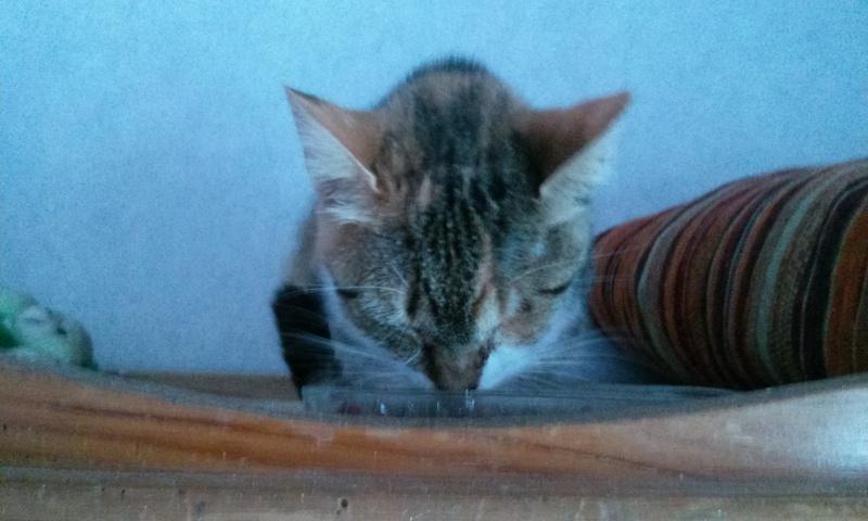 DUCHESSE - chatte femelle, née 2011/2012, borgne - (PASCANI) - adoptée par Chantal Pascal (dpt 63) - Page 4 88819167