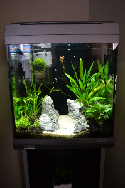 MES AQUARIUMS 240 L Communautaire et 30 L Aquascape + photos - Page 3 8910129416