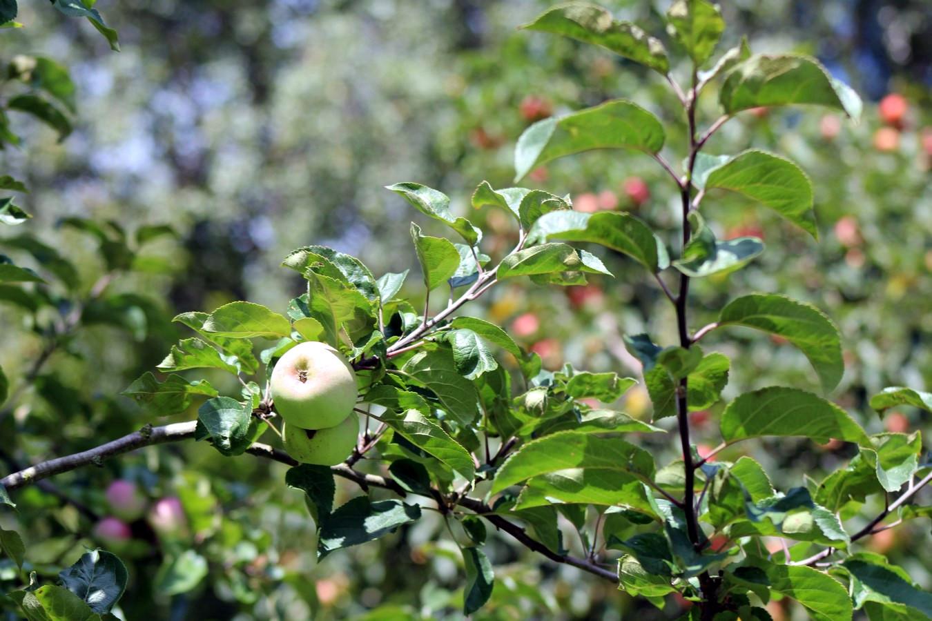 [Fil ouvert] Fruit sur l'arbre - Page 9 893885010Copier