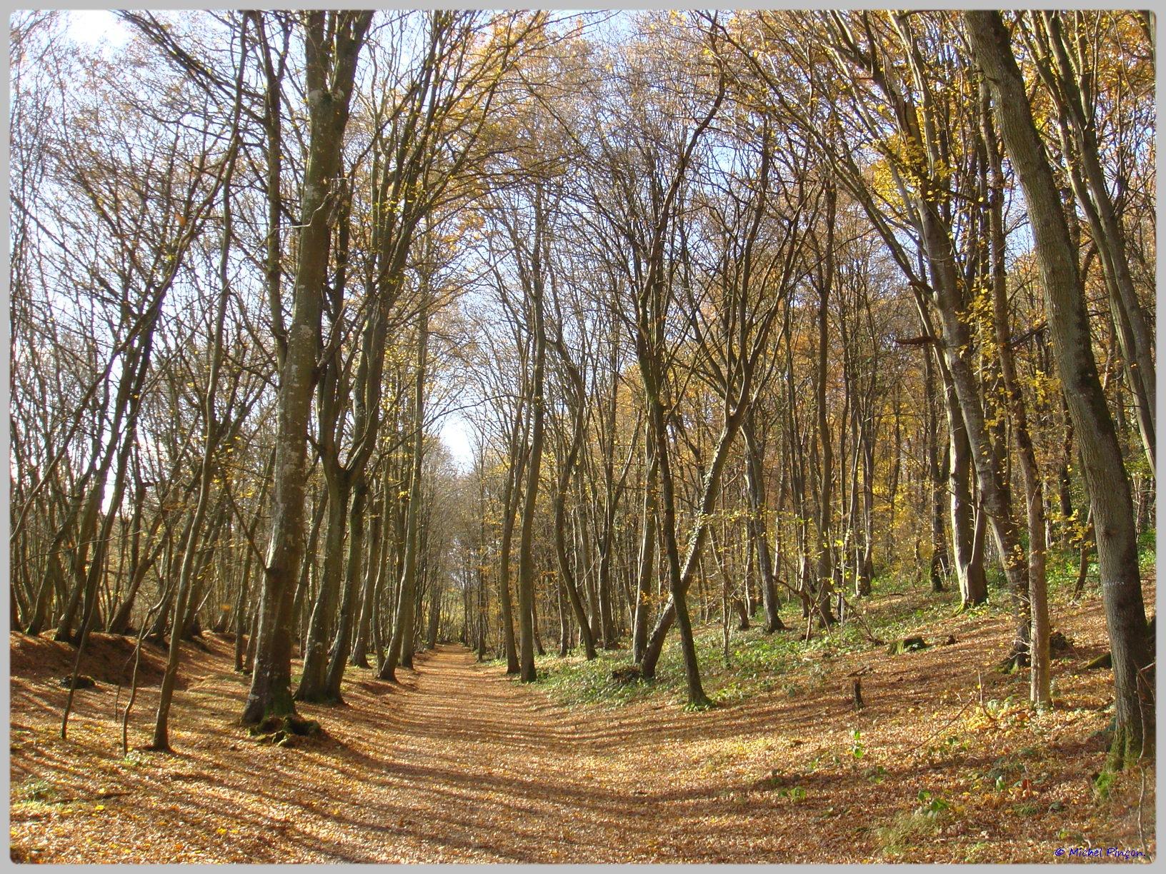 [fil ouvert] la forêt dans tous ses états - Page 10 894536DSC011584